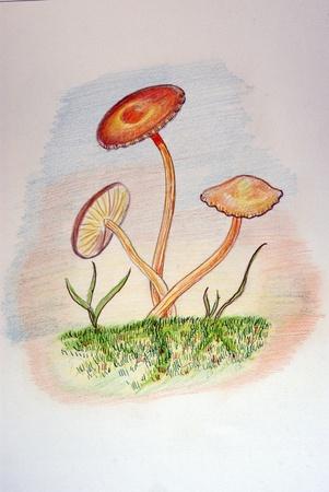 Mycology photo