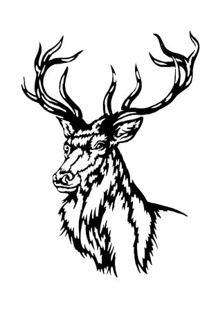 deer antlers photo