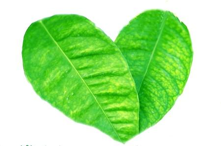 Corazón de planta Foto de archivo - 8792686