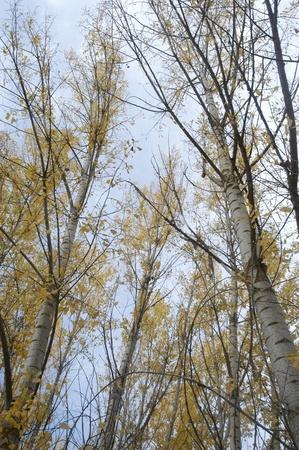 forest in autumn in alhama de granada photo