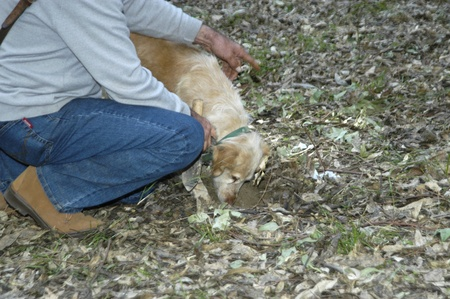 truffle hunting with a dog in sierra nevada Stock Photo