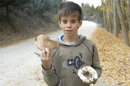 children collecting mushrooms Stock Photo - 10518771