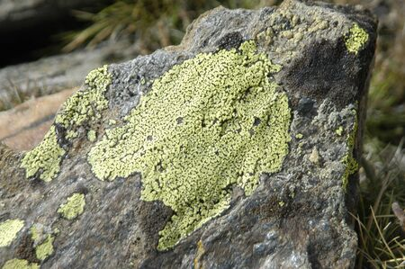plants species: flora and endemic species of native plants and sierra nevada to over 2700 meters