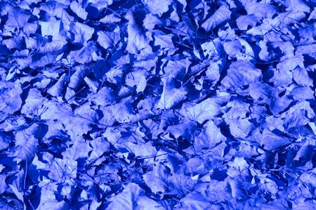 texture of leaves in blue Stock Photo - 10655840