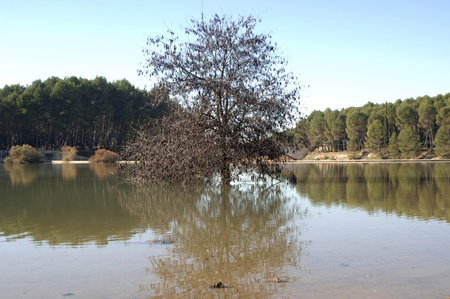 swamp of Cubillas in the province of Granada photo