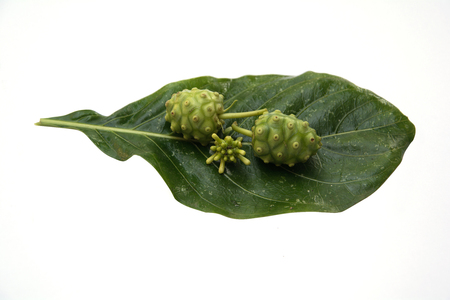 Noni Fruit  isolated on white background Image photo