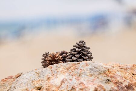 Two pines cone lying on a stone of sea foam on a beautifully blurred background. Abstract background. The concept of peace and tranquility.