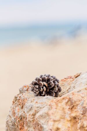 Pine cone lying on a stone of sea foam on a beautifully blurred background. Abstract background. The concept of peace and tranquility. Reklamní fotografie