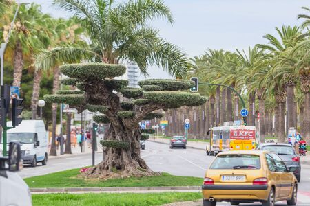 Bonsai Olive TreeBeautifully trimmed old olive tree in bonsai style, located in the center of Salou, Spain, Catalonia 13.06.2019 . Appearance of the city.