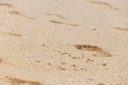 footprints of bare feet on wet beach sand.