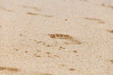footprints of bare feet on wet beach sand. Imagens - 128249708
