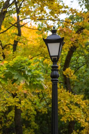 Street lamp in the thicket of the autumn city Park. Early autumn in cloudy weather.Concept: lyrical mood. Selective focus.