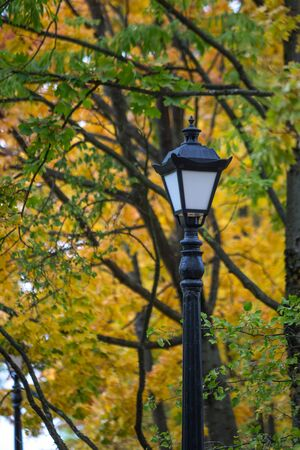 Old-fashioned street lamp on a cast-iron pole against a background of autumn trees with yellow - green foliage.