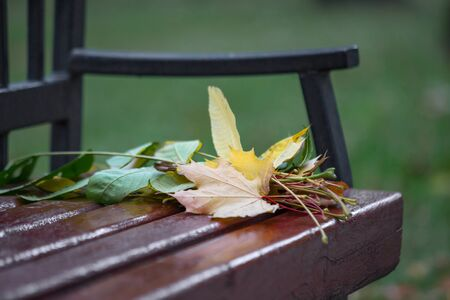 Modest bouquet of autumn leaves, forgotten on a bench in the city Park. Autumn story. Selective focus.