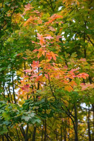 Beauty nature scene. Autumnal Park, Autumn Trees, Autumn forest in Seasonal nature