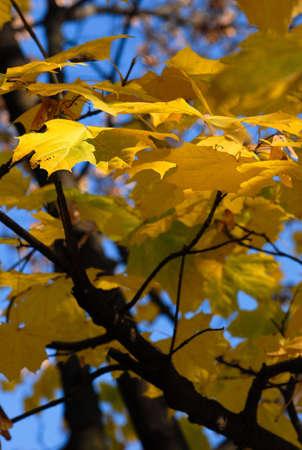 autumnal background Standard-Bild