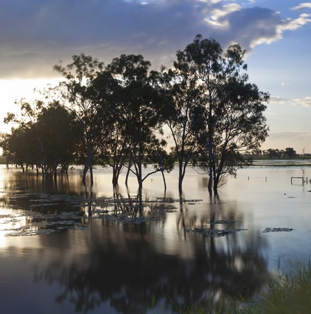 Trees & flooded creek, nr Rockhampton, Queensland, Australia