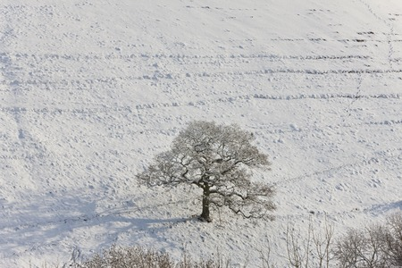 Winter tree & snow, Gloucestershire, UK 版權商用圖片