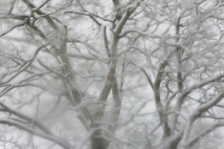 Tree covered in snow, Gloucestershire, UK 版權商用圖片