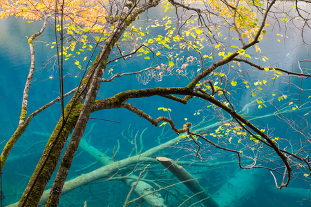 Autumn tree and lake, Jiuzhaigou National Park, Sichuan, China