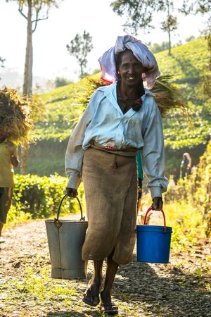 Woman collecting water with buckets,Tea Plantation, Hapatule, Sri Lanka