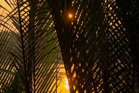 Sunset through palm leaves on the Megong Delta, Vietnam Stock Photo