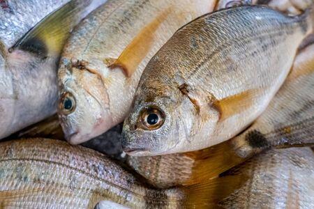 Fresh fish in market Tavira, Algarve, Portugal 版權商用圖片