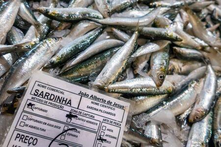 Fresh sardines in fish market, Algarve, Portugal