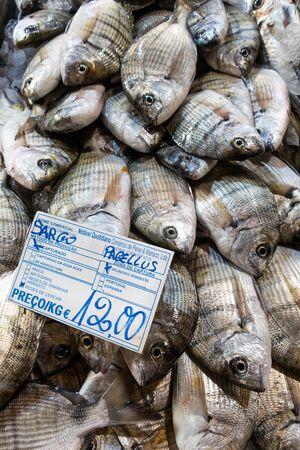 Seabream in fish market, Tavira, Algarve, Portugal 版權商用圖片