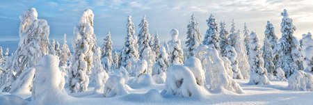 Winter scene in Lapland - background banner image