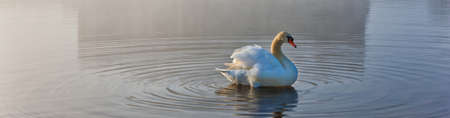 Swan making ripples in the water - background banner image