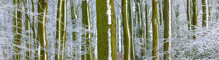 Woodland trees covered in snow and frost - background banner image