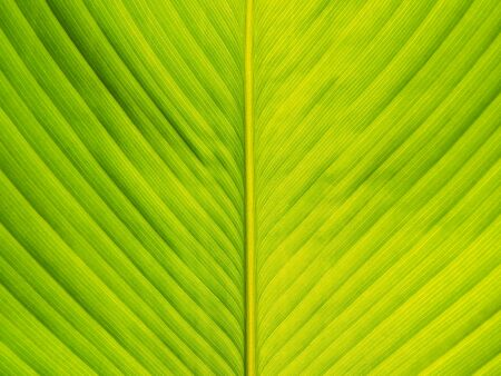 Texture of green leaf for background Stock Photo