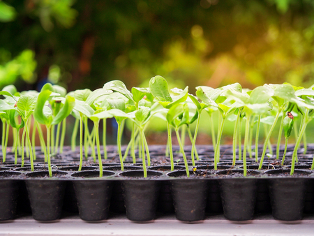 Melon sprout growing up in seedling tray , agriculture planting concept.