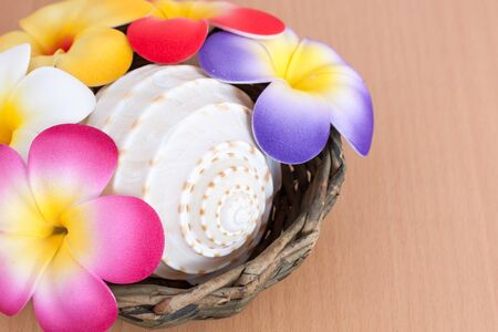 artificial flower: Seashell with artificial flower on plywood background Stock Photo