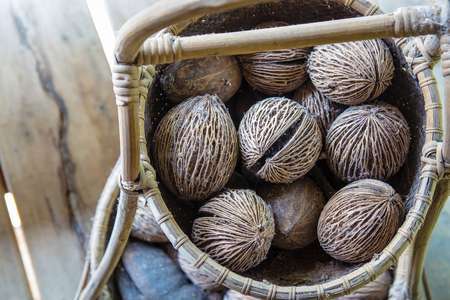 plant seed: Dry cerbera oddloams seed with basket people like to use for grow the other plant or handicraft and decoration