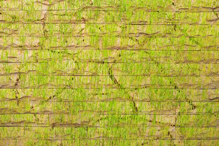 background  grass: Bricks wall background grass pattern