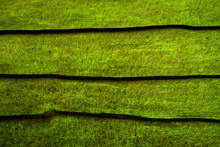 background  grass: Wood pattern background grass style Stock Photo