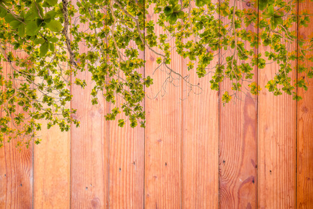 creeper: Wood wall background with leaf