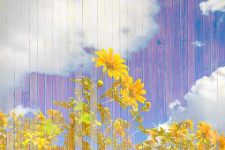 pattern grunge: Abstract wood background texture flower pattern grunge style Stock Photo