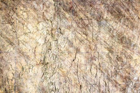 bark background texture: bark background texture grunge style Stock Photo