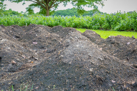fertile: Fertile soil prepare for plant in the garden