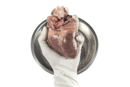 clean artery: Heart organ in hand with rubber glove isolated white background