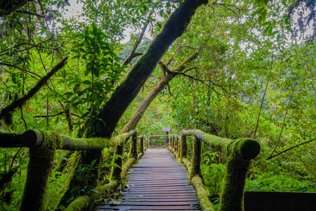 chiangmai: Ang Ka Nature Trail, Chiangmai, Thailand Stock Photo