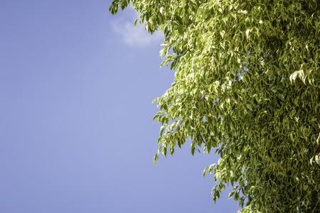 Blue sky with leaf Stok Fotoğraf