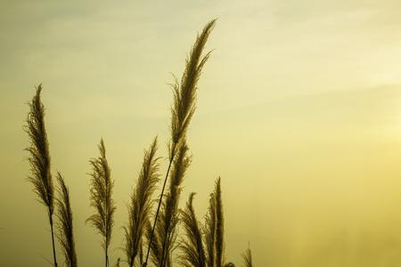Silhouette grass tree Stok Fotoğraf