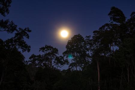 Full moon in the drak jungle