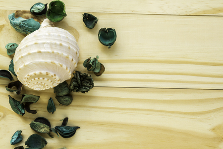 Dry flower with seashell on wood background