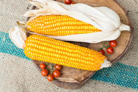 Dry brown corn and mini tomato organic plant in isolation closeup shot Stock Photo