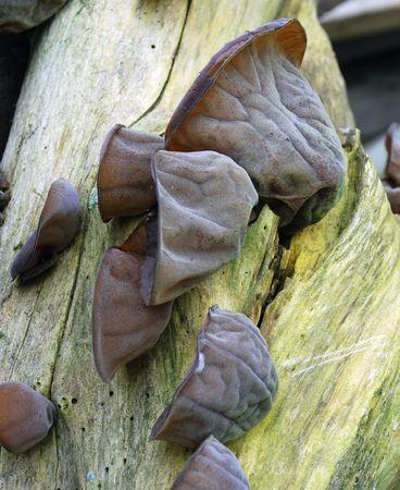 spore: tree fungus on broken branch